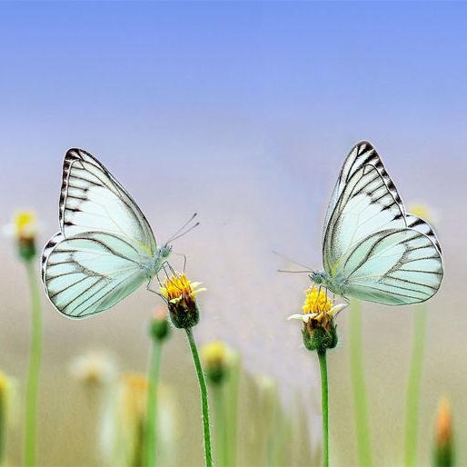 mariposas de frente, acompañamiento emocional